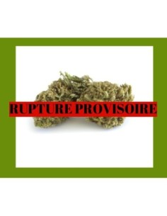 Pack promo BlueDream