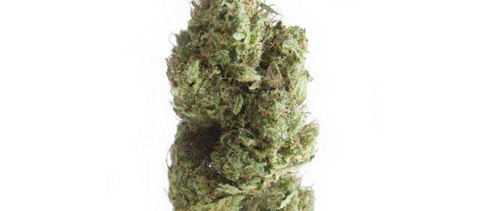 BANANA Kush 14,5% - Fleurs de CBD Indoor