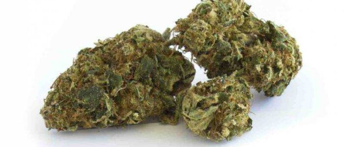 Caramel Candy 10,9% - Fleurs de CBD