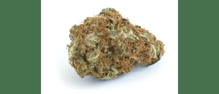 CHEESE CBD 11,2% - Fleurs de CBD -