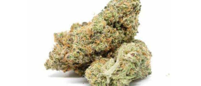 COOKIE 12,5 % - Fleurs de CBD Greenhouse