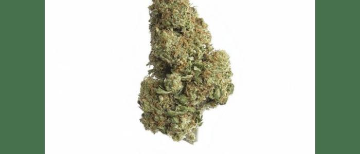 WHITE WIDOW 15,6% - Fleurs de CBD