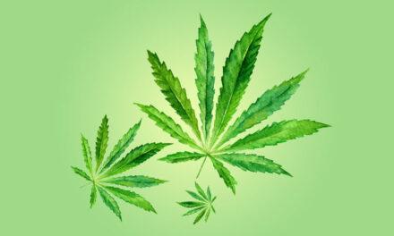Cannabis : Douleur, Augmentation d'appétit et Désir sexuel