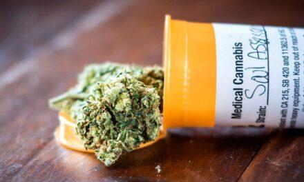IACM : consommation de cannabis, cbd et retombéées prométeuses