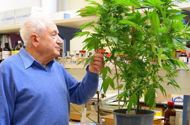 Le Professeur Mechoulam transforme à nouveau l'industrie du Cannabis