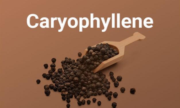 Qu'est-ce que c'est que ce terpène ? Le caryophyllène vu par CBD.fr