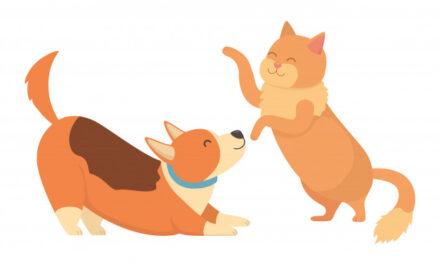 Le bon dosage en huile de CBD pour les chiens et chats !